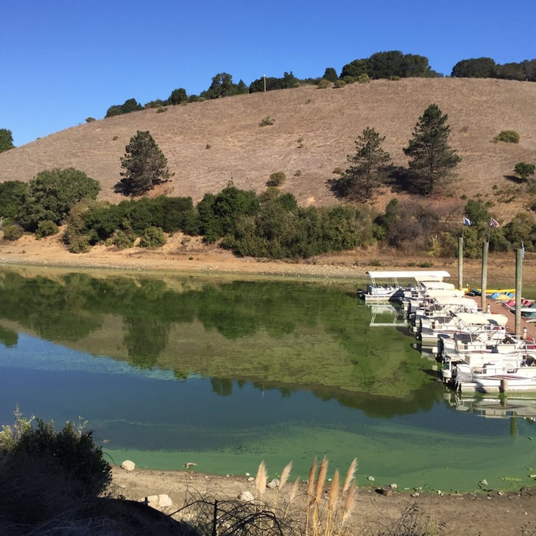 Lake Chabot Regional Park in Castro Valley - Parent Reviews